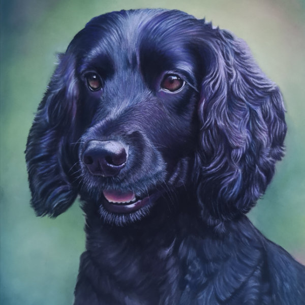 Bailey dog portrait, by Sue Kerrigan-Harris.